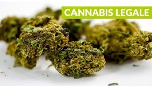 cannabis-legale-1024x576