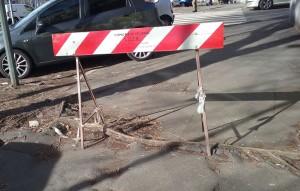 Radice emersa dall'asfalto