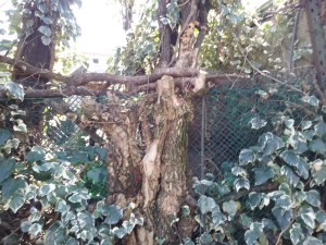 06 Tutt'uno di piante e rete metallica.
